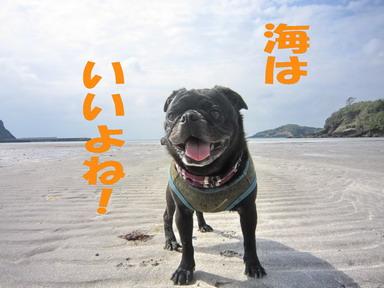 IMG_5048根獅子浜