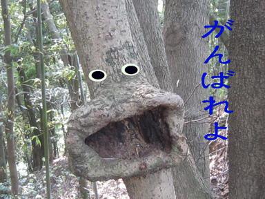 IMG_5052大口の木