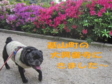 IMG_5082つつじ