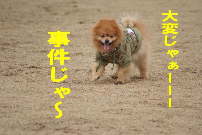 1_20110301143048.jpg