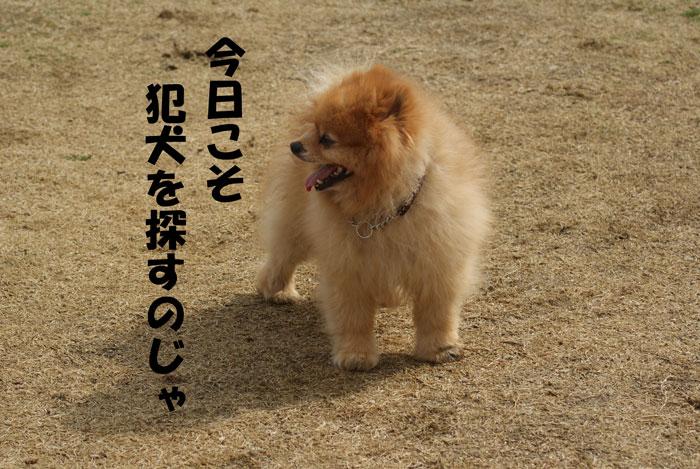 1_20110302143210.jpg