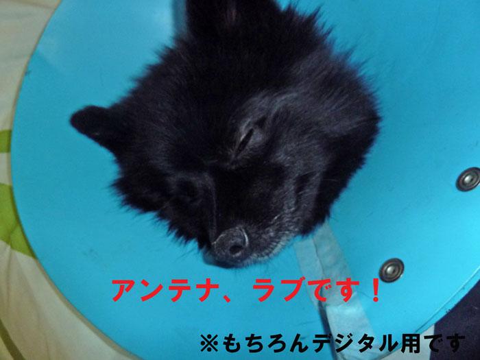 2_20110118125200.jpg