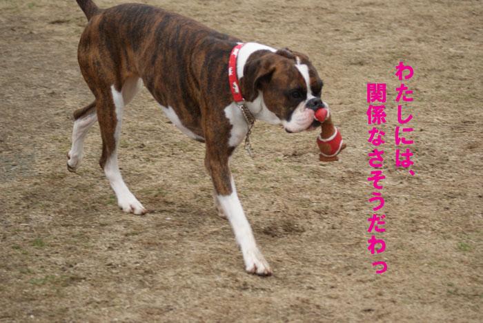 7_20110301143112.jpg
