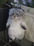 星見る猫1