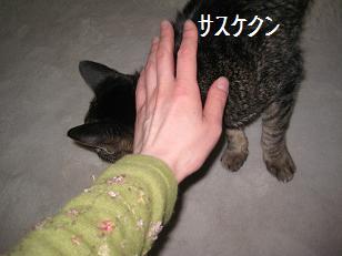 2011_0227_134142-IMG_4372.jpg