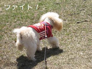 2011_0410_113428-IMG_4698.jpg