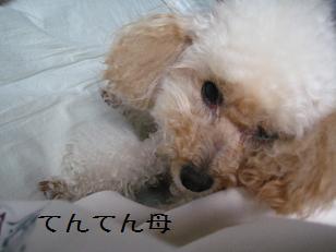 2011_0625_165623-IMG_5829.jpg