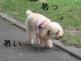2011_0711_162019-IMG_5999.jpg