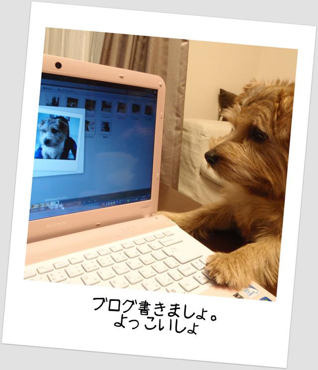 パソコンとぽーさん