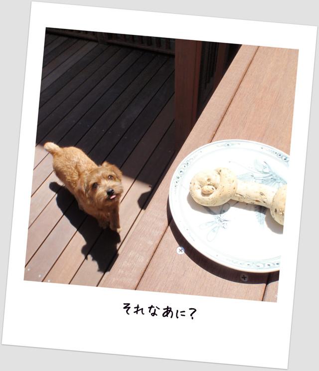 いっぴき1