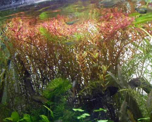 水草画像2