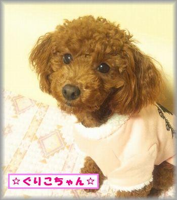 DSC_0263リルベビ・ぐりこ