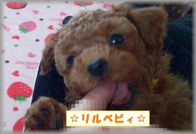 DSC_0363リルベビ♂
