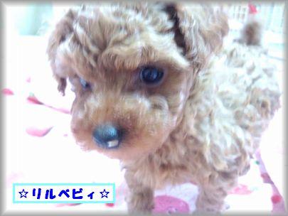 DSC_0516リルベビ♂