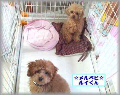 DSC_0212まお&ルイ