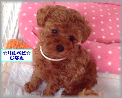 2013 0116 リルベビじなんIMG_4317
