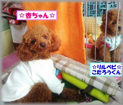 2013 0225 杏ちゃん・こたろう
