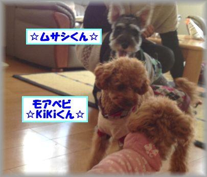 2013 0408 ベリー&キキ&ムサシ