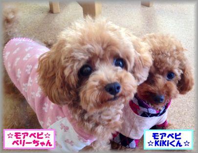 2013 0408 ベリー&キキ3