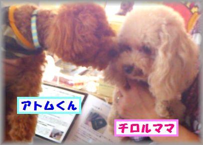 DSC_0077_20110929203732.jpg