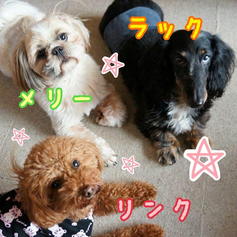 Link-Luck-Merry-DSC09316_deco.jpg
