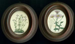 Bern001 Houstonia caerulea & Senecio lilacinus M
