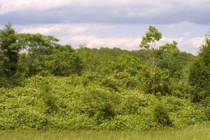 米国南部での繁茂状況