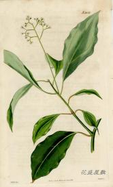 Curtis 1826