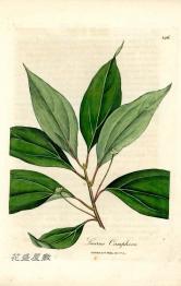 Woodville 1810