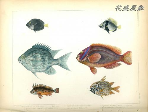 Perry's expediton  Fish VI