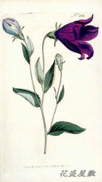 Curtis 1805