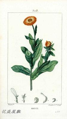 Flore Médicale 328