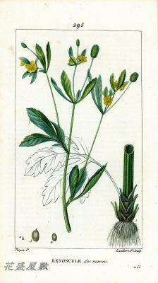 Flore Médicale 295