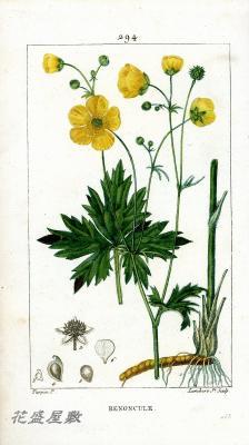 Flore Médicale 294
