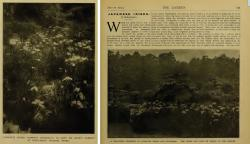 The Garden 1915