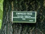 Empress tree