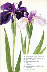 m-iris