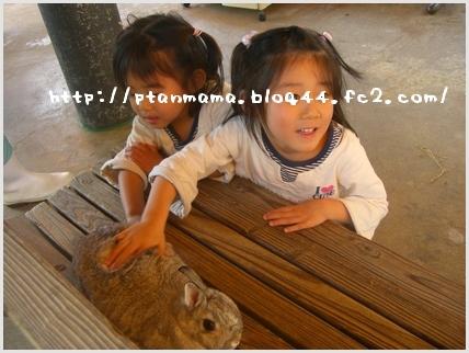 CIMG8645-0.jpg