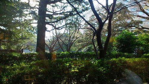 朝食会場前の庭