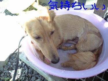 ぷりん風呂11