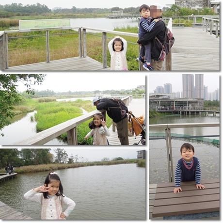 Wetland park-11