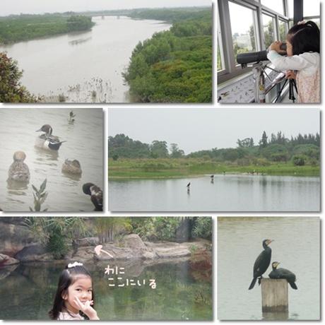 Wetland park 33
