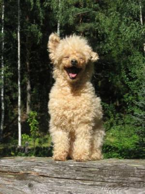 犬の笑顔_convert_20121226221429