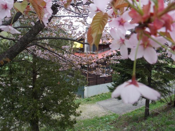 桜+023_convert_20130522213700