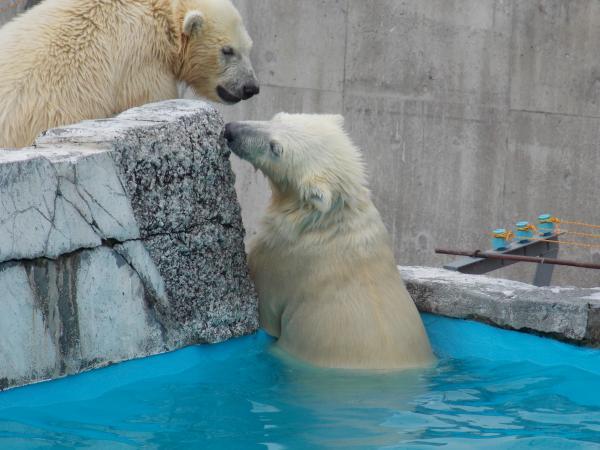 動物園6月+055_convert_20130618220855