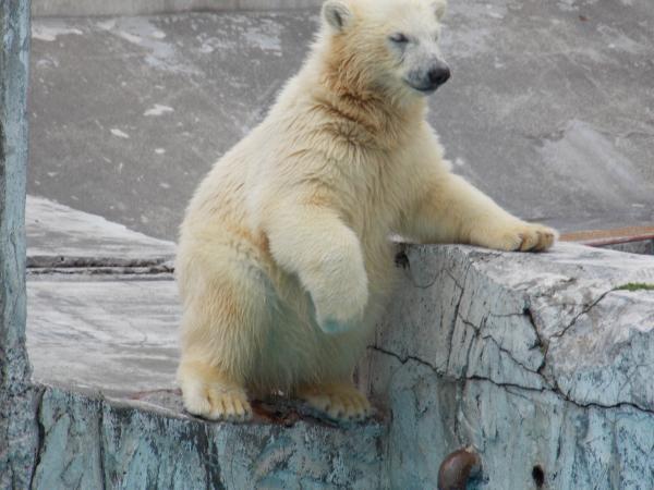 動物園6月+065_convert_20130618221226