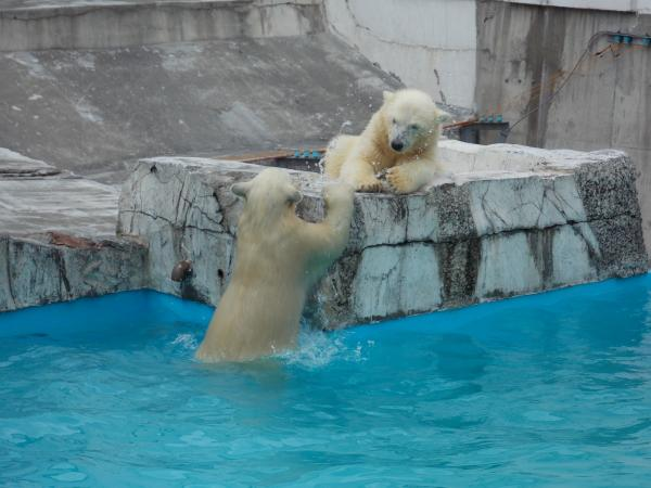 動物園6月+080_convert_20130618221821