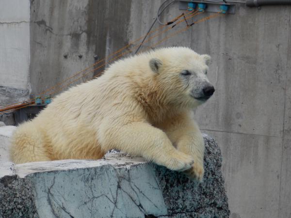 動物園6月+100_convert_20130618222225