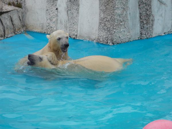動物園6月+132_convert_20130618222827