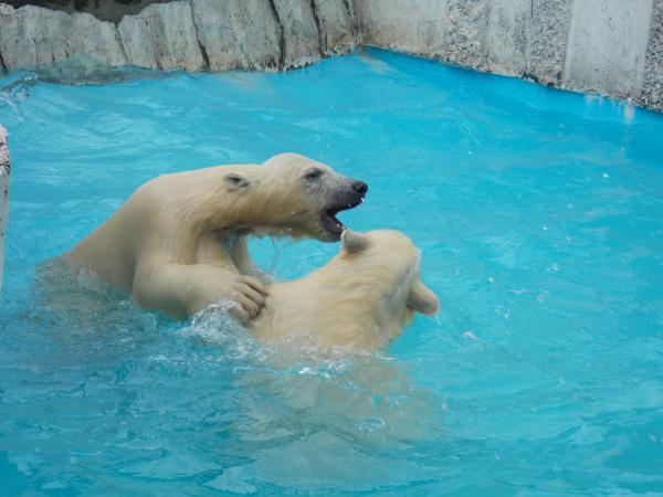動物園6月+140_convert_20130618223308
